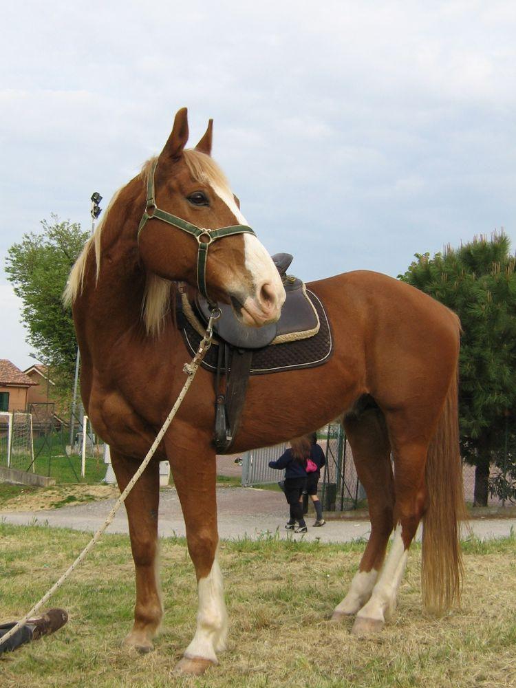 S. Giorgio2009 (5)
