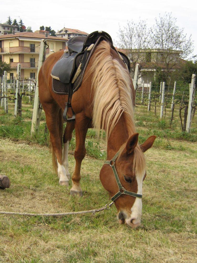 S. Giorgio2009 (9)