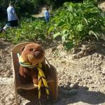 Castorini in visita all'orto del contadino, 10/05/2014